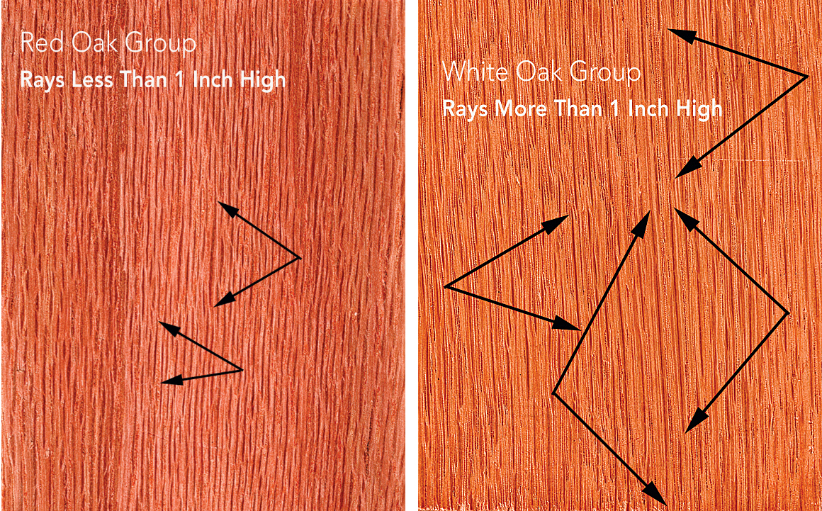 What S In A Name The Science Of Wood Identification By